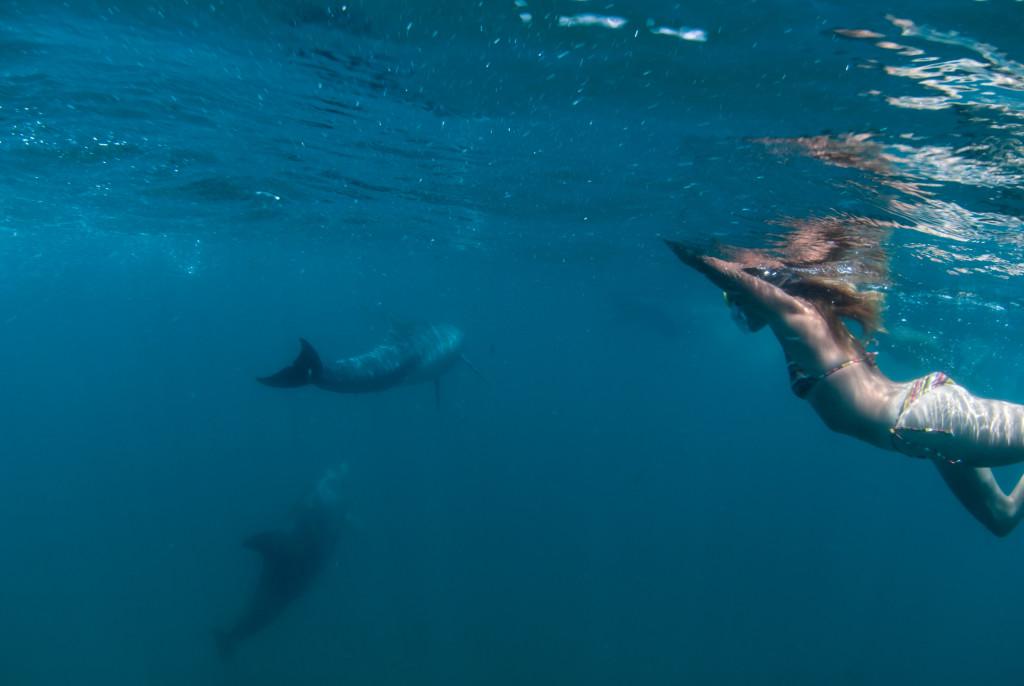 Whale-Sharks-SC-174-1024x686.jpg
