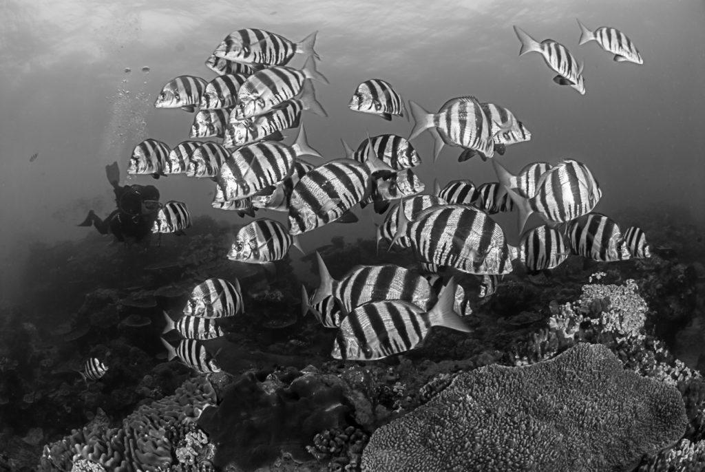 bw-zebra-fish-2-1024x686.jpg
