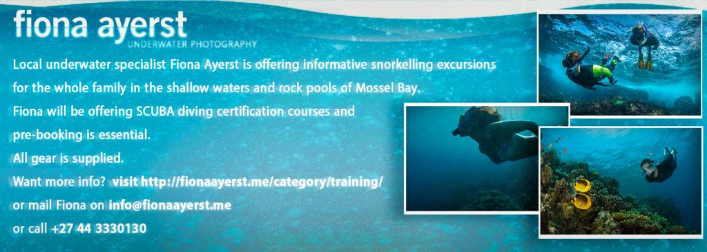 snorkeling trips in mossel bay