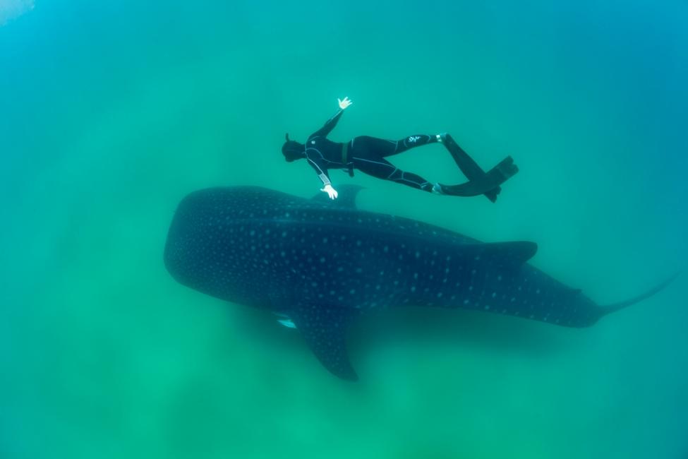 Savannah and the whale shark 2
