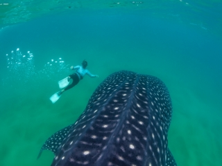 Louis from Pisces diving and a whale shark