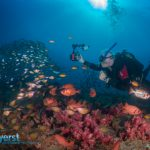 Underwater Photography short course – Ponta do Ouro